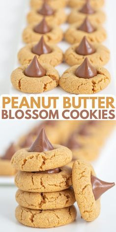Peanut Butter Blossoms - These are the best Peanut Butter Blossoms! They're made with butter, loads of peanut butter, and the perfect balance of brown sugar and granulated sugar. Pop a chocolate kiss in the center and they're ready for serving! This is the Hershey Kiss Cookie recipe that you have to try! #cookiedoughandovenmitt #peanutbutter #cookies #dessert Peanut Butter Dessert Recipes, Peanut Butter Blossom Cookies, Best Peanut Butter, Cookie Recipes, Peanut Blossoms, Hershey Kiss Cookie Recipe, Sugar Pop, Brown Sugar, Christmas Baking