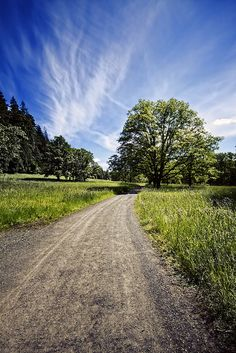 Love quiet country roads. Perfect for bike riding or running!