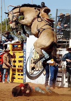 Mt Isa Australia 14.08.05 - Saddle bronc rider David Loffel somehow escaped injury in a fall at the Mt Isa Rodeo. (image by Brian Cassey)