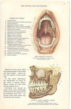 maxillofacial drawings.