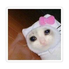 Sad Cat Meme, Cat Memes, Stupid Funny Memes, Haha Funny, Animal Memes, Funny Animals, Reaction Pictures, Funny Pictures, Funny Cat Photos