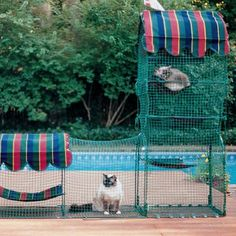 Town & Country Outdoor Cat Enclosure » Awesome!