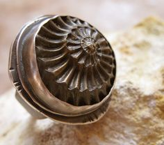Fossil Ammonite in a Silver Ring