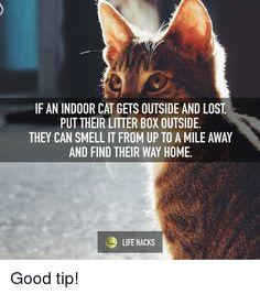 Bengal Cat Facts finding a lost indoor cat Cat Care Tips, Pet Care, Pet Tips, Kitten Care, Cat Facts, Litter Box, Cat Life, Crazy Cats, Cool Cats