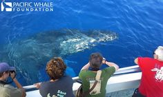 Whale watching / valsafari Whale Watching, Hawaii Travel, This Is Us, Foundation, Island, Animals, Animales, Animaux, Animais
