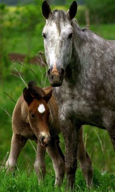 480x800 Wallpaper horse, stallion, cub, couple, care, grass
