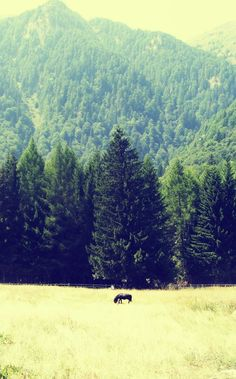 Beautiful view from Stana Regala , ( Pajistea Stanii )  Sinaia ( Romania ) . Mountains everywhere . Fresh air , the feel of the wind in your hair . And the little black horse makes all the picture . Photography . Lovely photo !