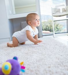 Immediate Programs In Expert Carpet Cleaning Sydney Services