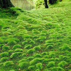 moss garden, Saihou-ji Temple, Kyoto, Japan