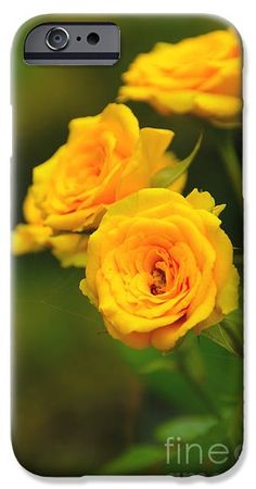 Yellow Roses iPhone 6 Case
