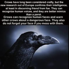 .....Crow...They protect my pups from eagles by making a loud racket.  I love them, they remind me of Ottertrack.  ..bb..