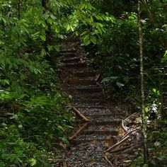 Hiking trail at Tranquilo Bay - almost 2 miles in the jungle.