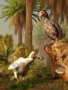 """Dodo Hide n Seek""   A pair of #dodos play on their #tropical #island"