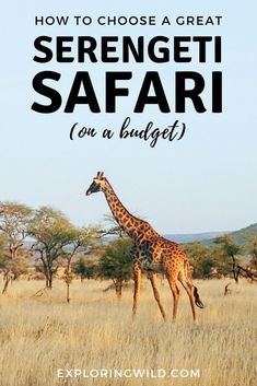 A Serengeti safari is on many peoples' travel bucket list, but if you're a budget traveler, can you still enjoy this exciting experience? Here's how to choose a memorable safari if you're traveling to East Africa on a budget. Travel Guides, Travel Tips, Travel Advise, African Safari, African Animals, Kruger National Park, East Africa, Africa Travel, Budget Travel