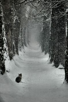 A cat in an avenue of trees