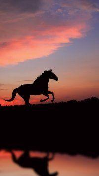 this is making me sleep Cute Horses, Pretty Horses, Horse Love, Beautiful Horses, Animals Beautiful, Horse Wallpaper, Animal Wallpaper, Iphone Wallpaper, Horse Photos