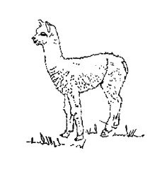 Alpaca coloring pages Free Coloring Pages misc ideas