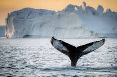 """Greenland- I would like to go whale watching and see the """"Northern Lights"""" in greenland"""