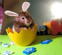Easter-Mouse with bunny ears