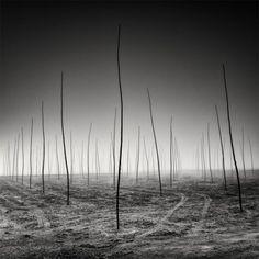 Minimalist Tree Landscapes by Pierre Pellegrini