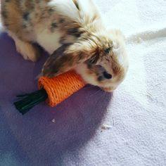 Rabbit Bunny Babyanimal