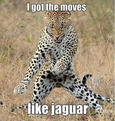 I GOT THE MOVES LIKE JAGUAR!!! XD