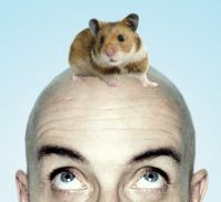 Baldness Cure? Japanese Study Successfully Grows Hair on Hairless Mice