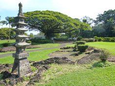 "Large ""Monkey Pod"" tree in park, of Honolulu in Oahu, Hawaii, Friday Nov.30,  2012"