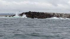 Coast trip crabbing