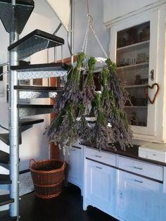 PASTU domov: Levandulová sklizeň