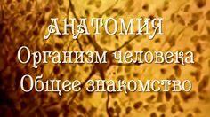 Анатомия!! ОРГАНИЗМ ЧЕЛОВЕКА.1.