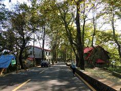 Autumn in Moganshan