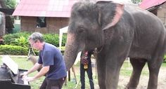 Elephant spontaneously plays piano duet (VIDEO) » DogHeirs | Where Dogs Are Family « Keywords: piano, elephant, Thailand