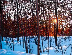 Early Morning Near Bancroft by Tim Packer, Oil on Canvas, Painting   Koyman Galleries