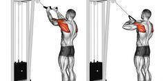 Como treinar músculos que não estão crescendo? 5 dicas importantes!