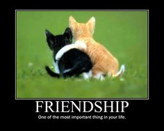 I included this in my youth culture board because friendship means a lot to me, withought friends life would be very boring. True Friends, Great Friends, Enfp And Infj, Very Demotivational, Friendship Images, Friend Jokes, Youth Culture, My Youth, Thought Of The Day
