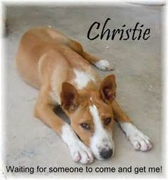 Christie is a Bahama Potcake dog. She is a beautiful and intelligent ...