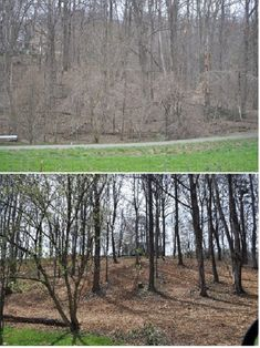 Before and After Clearing