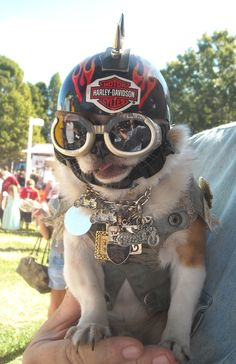 Harley Doggg- safety first!