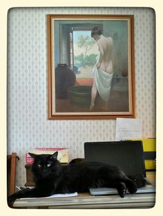 Art Shot Black (uninterested) Cat With Bum