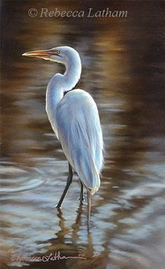 1000 images about egrets on pinterest herons sanibel for White heron paint