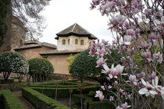 La Magnolia de hoja caduca en la Alhambra (Patronato de la Alhambra)