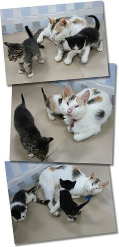 Help Kitna and her kittens!