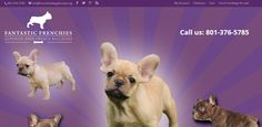 http://frenchbulldogsforsale.org/