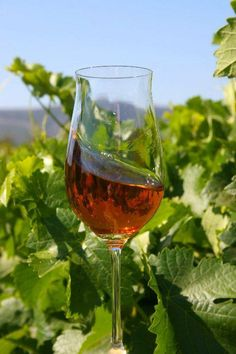 The best Moscato (Moscatel) are from Portugal