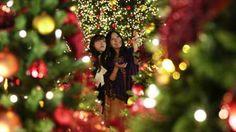 Quase 2 milhões de euros em luzes de Natal na Madeira
