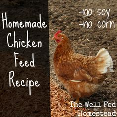 homemade chicken feed recipe / http://www.wellfedhomestead.com/homemade-chicken-feed-without-soy-or-corn