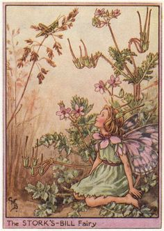 FLOWER FAIRIES/BOTANICALS: The Stork's-Bill Fairy; This is an original vintage Cicely Mary Barker Flower fairies colour print. It is not a modern reproduction, c1948; approximate size 11.0 x 7.5cm, 4.25 x 3 inches