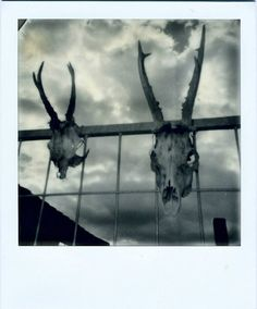 Polaroid 635 Supercolor, PX 600 Cool Impossible film