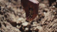 Jésus a raconté la parabole d'un semeur qui était sorti pour semer sa semence sur quatre types de terrain. Quel type de terrain es-tu? As-tu... Kingdom Of Heaven, Types Of Soil, Terra, Farmer, Seeds, Ears Of Corn, Farmers, Grains